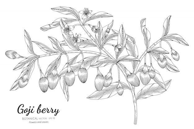 Illustrazione botanica disegnata a mano della frutta della bacca di goji con la linea arte