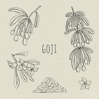 Goji su un set disegnato a mano ramo. raccolta fioritura, bacche secche. illustrazione d'annata in bianco e nero isolata schizzo di vettore.