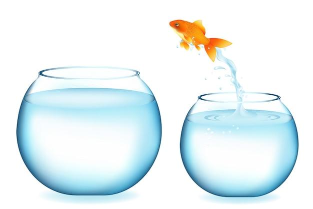 Pesce d'oro che salta ad un altro acquario, isolato su bianco