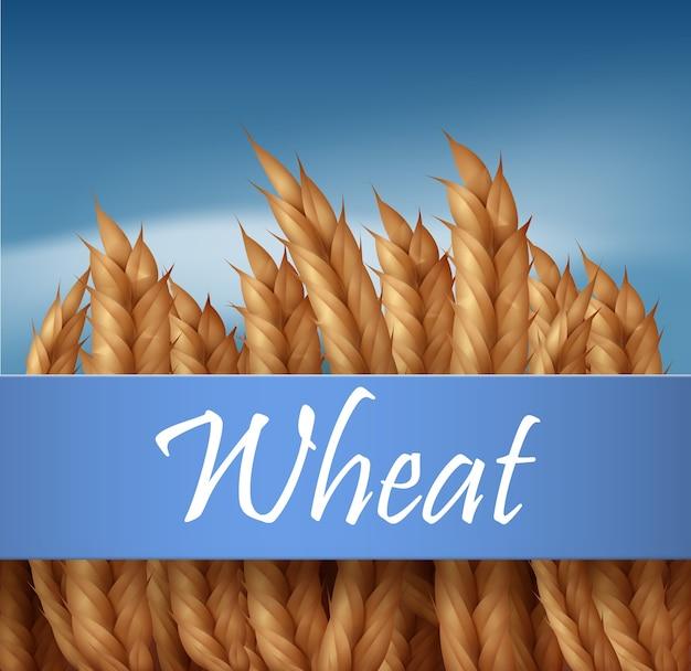Spighette dorate, campo di grano di orecchie con cielo blu e spazio per il testo