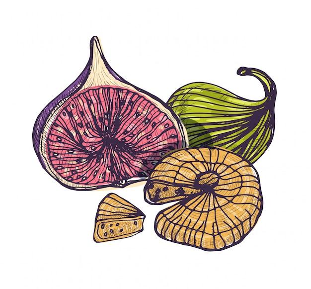 Splendido disegno botanico di gustosi fichi freschi e secchi isolati su sfondo bianco. frutta biologica tropicale intera e tagliata disegnata a mano in stile vintage. illustrazione realistica colorata.