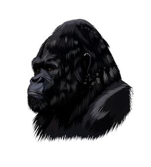 Ritratto di testa di gorilla da una spruzzata di acquerello, disegno colorato.