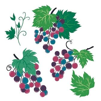 Grappoli d'uva isolati su sfondo bianco. grafica vettoriale.