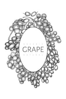 Modello di disegno dell'uva. illustrazione disegnata a mano della bacca dell'uva di vettore. banner botanico retrò stile inciso.