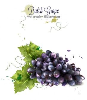 Acquerello di uva su sfondo bianco