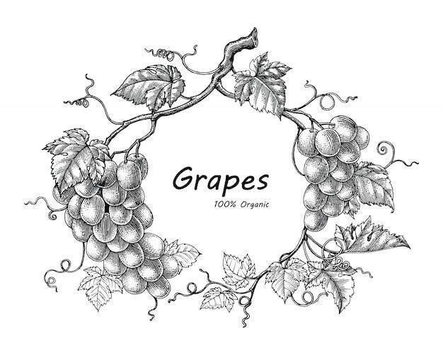 Illustrazione d'annata dell'incisione del disegno della mano della struttura dell'uva