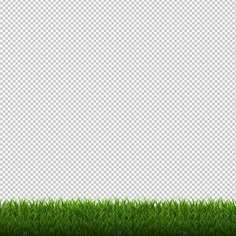 Sfondo trasparente di confine erba isolato, illustrazione