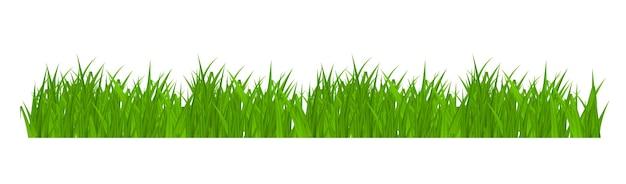 Bordo di erba isolato