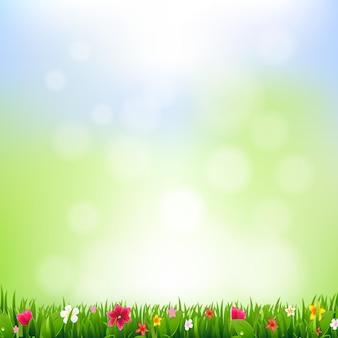 Erba e fiori e bokeh
