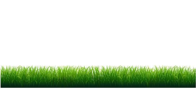 Cornice erba con sfondo bianco