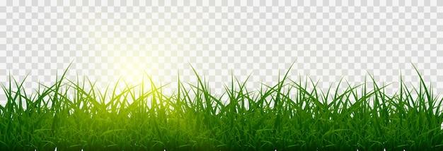 Erba, prato. erbe png, prato png. giovane erba verde con luce vivida del sole.