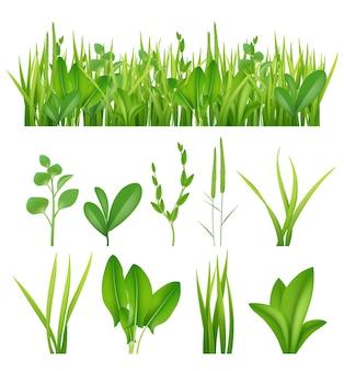 Erba realistica. ecologia imposta erbe verdi foglie piante lifes prati raccolta elementi vettoriali. prato verde erba, illustrazione lussureggiante estate prato