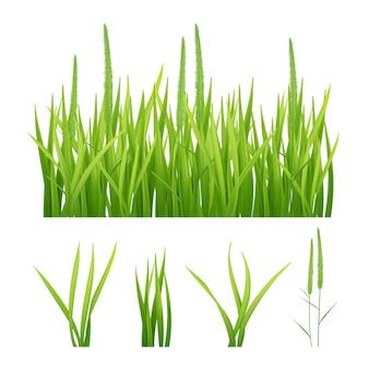 Erba realistica. immagini verdi della natura degli oggetti del plantano 3d delle foglie e dell'erba