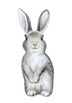 Illustrazione del coniglietto grigio coniglio