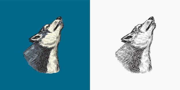 Lupo grigio che ulula una bestia predatrice selvaggia foresta animale vettore inciso disegnato a mano vintage vecchio schizzo