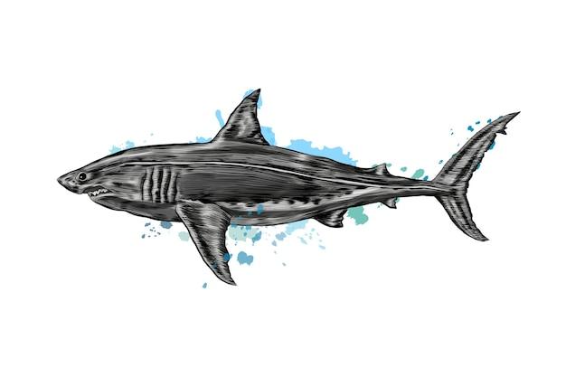 Grande squalo bianco da una spruzzata di acquerello, disegno colorato, realistico.