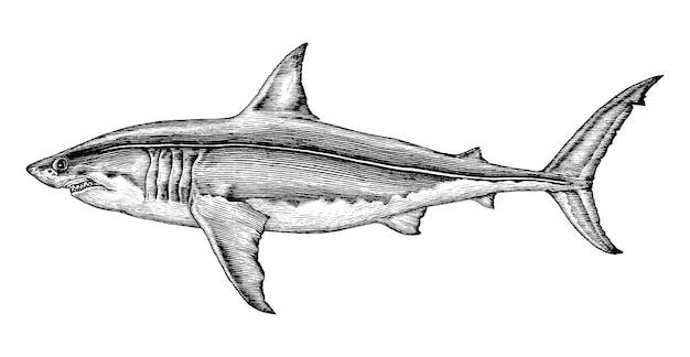 Grande mano dello squalo che disegna l'illustrazione d'annata dell'incisione