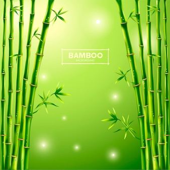 Sfondo di bambù verde, panorama di bambù