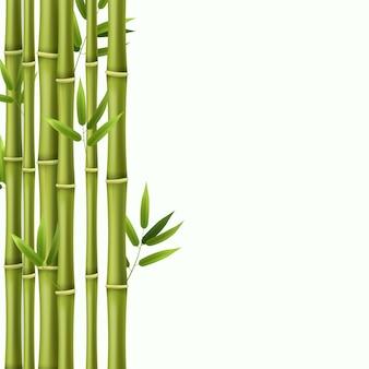 Illustrazione di steli di bambù verde foresta pluviale