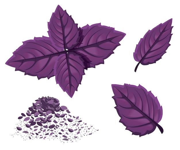 Basilico verde. icona di foglie di erbe aromatiche. emblema dell'erba di basilico verde per elemento culinario, ingrediente da cucina, decorazione del pacchetto, adesivo, etichetta.