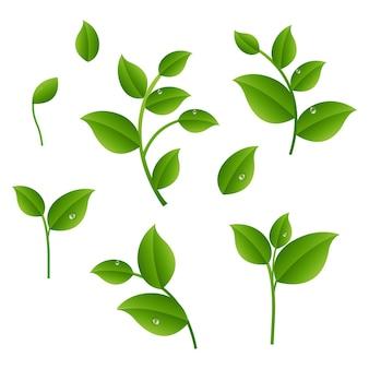 Rami verdi con foglie