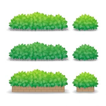 Cespugli verdi isolati su fondo bianco, piante in vaso all'aperto. illustrazione.