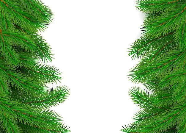 Confine di rami di abete verde