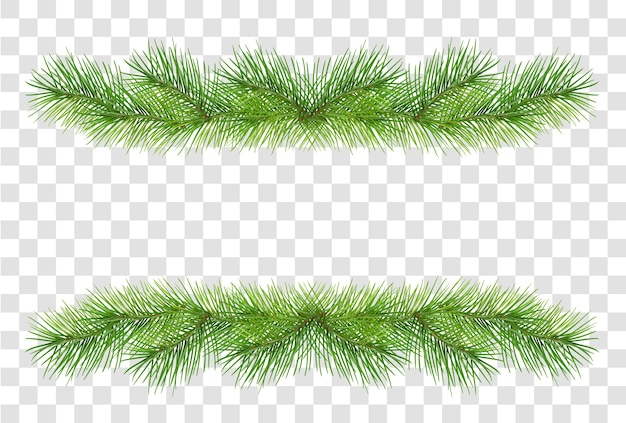 Rami di pino lanuginosi verdi per la decorazione della ghirlanda di natale isolata su fondo trasparente. illustrazione