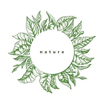 Fogliame verde. schizzo botanico di tè, ramo, foglie, fiori. annata disegnata a mano