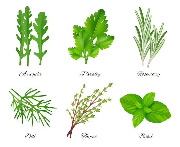 Specie di alimenti verdi prodotti aromatici ingredienti prezzemolo rosmarino salvia cipolla raccolta.