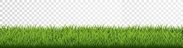 Bordo dell'erba verde impostato su sfondo trasparente.