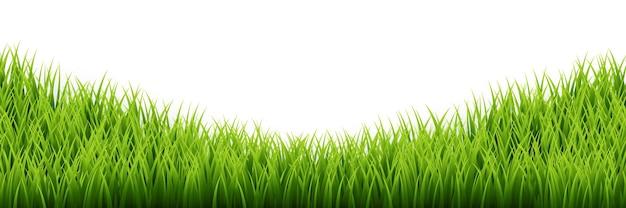 Insieme del bordo dell'erba verde