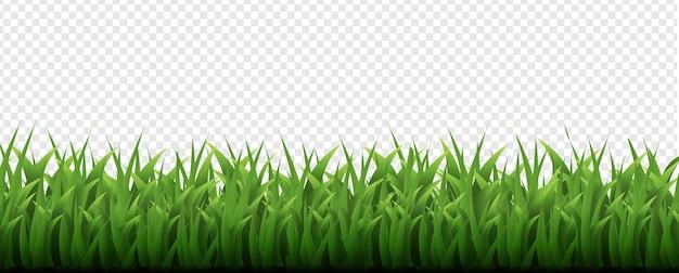 Sfondo trasparente di bordo di erba verde