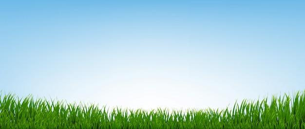 Bordo di erba verde con sfondo blu