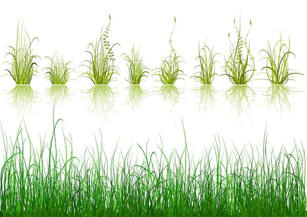 Illustrazione di elementi di design di erba verde
