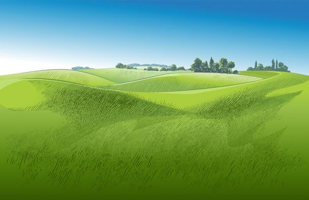 Campo di erba verde su piccole colline. prato, pascolo, fattoria. panorama del paesaggio di paesaggio rurale dei pascoli della campagna.