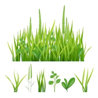 Erba verde. immagini fresche della natura degli elementi del giardino delle erbe e delle foglie