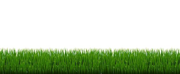 Panorama di erba verde con sfondo bianco