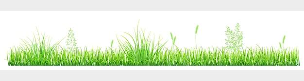 Erba verde e spighette su sfondo bianco
