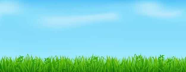 Erba verde sul prato o sul campo primaverile. confine realistico delle piante del prato estivo sullo sfondo del cielo azzurro con nuvole.