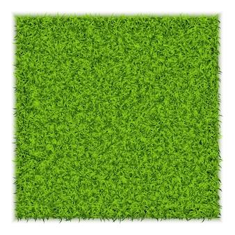 Green grass square illustrazione