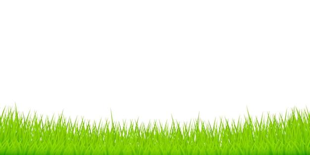 Erba verde su bianco