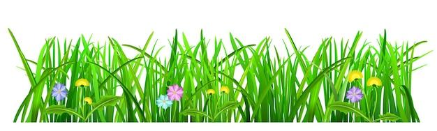 Erba verde con fiori su sfondo bianco