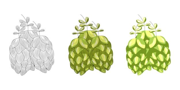 Luppolo verde per fare la birra isolato su sfondo bianco. erba di luppolo disegnata a mano.