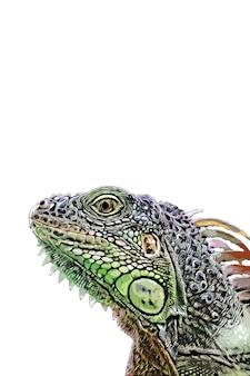 Acquerello dell'iguana verde