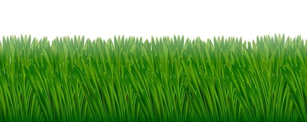 Modello orizzontale senza cuciture dell'erba succosa verde.