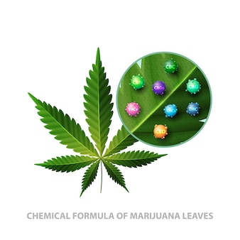 Foglia verde di cannabis con molecole 3d di formule chimiche di cannabis