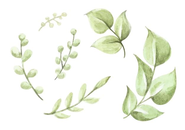 Collezione di elementi di foglie verdi set di illustrazioni floreali ad acquerello