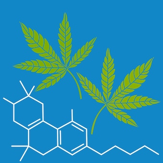 Formula di canapa con foglie verdi cbd droga marijuana