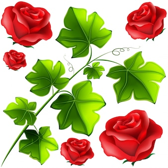 Foglie verdi e rose rosse